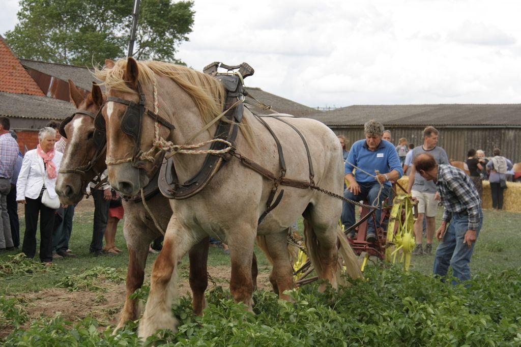 Paardenfeesten